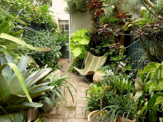 Tiny inner-city Sydney courtyard garden. Design Paradisus