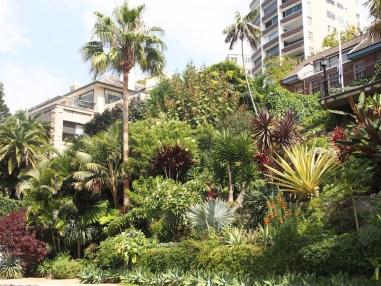 Waterfront garden on Sydney Harbour. Design Paradisus