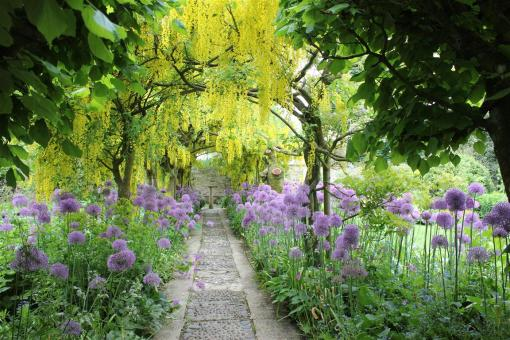 Laburnum Walk at Bodnant Castle in Wales