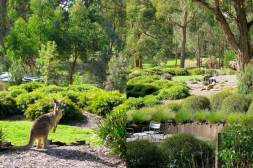 Sue Meli garden, Macedon Ranges