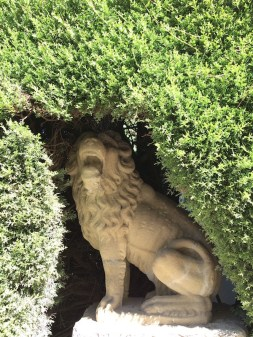 LION HIDING IN HEDGE AT THE TOP OF THE MAIN DRIVE