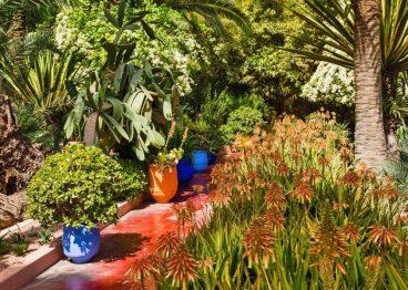 Pathway Plantings, Jardin Marjorelle, Marrakesh, Morocco