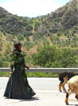 Nomadic woman with her goats, Zagros Mountain highway, Iran