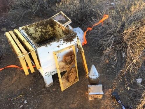 beekeeping requeening
