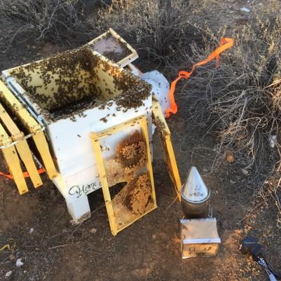 Langstroth Hive Requeening