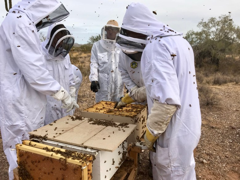 teaching beekeeping