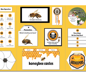 honeybee brainyfile