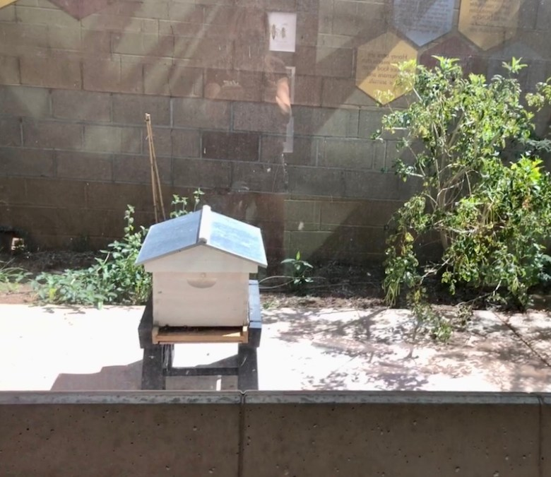 exterior hive at butterfly wonderland