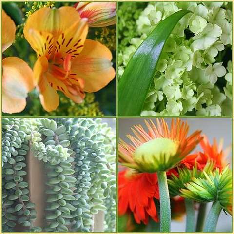 Комнатные растения, фото и названия, каталог домашних цветов