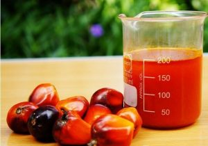palm oil can