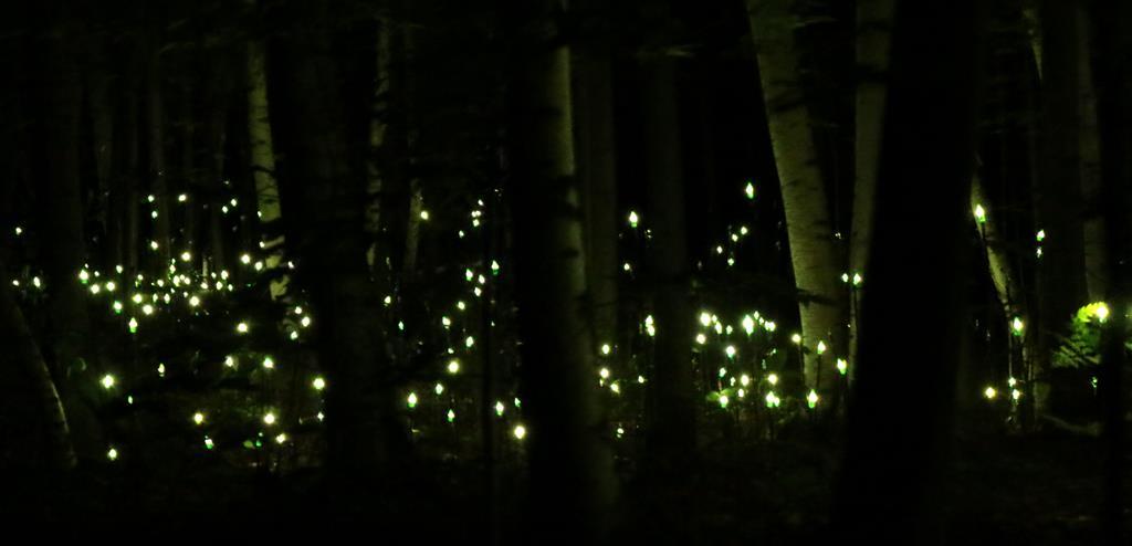 foresta-lumina-251-copy