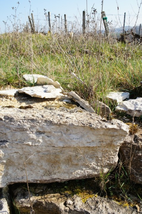 More chalky limestone in Les Clos.