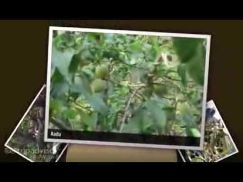 Lage Ek Number Full Video Song (Bhojpuri) – Pat Gaili Bhaoji