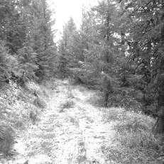 Old Miller Logging Rd