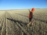 Wheat Field E Mt