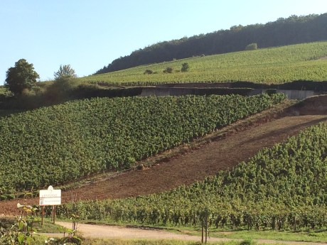 The vineyards of Burgundy