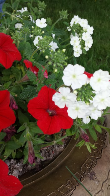 Red Petunia and ?