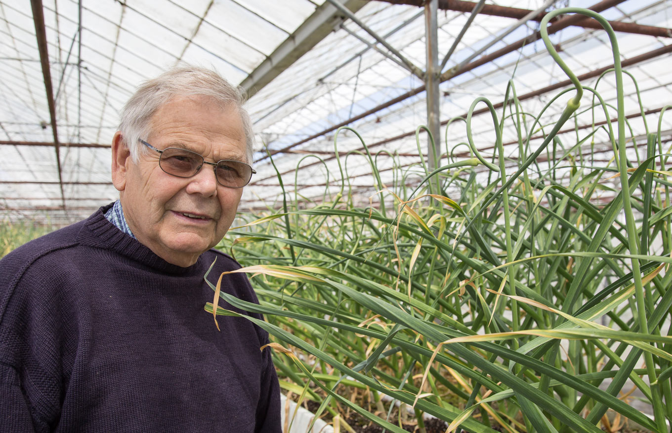 Dave Tostevin in his greenhouse by garlic plants