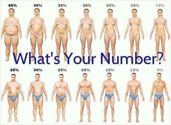 trim body fat/body fat percentages
