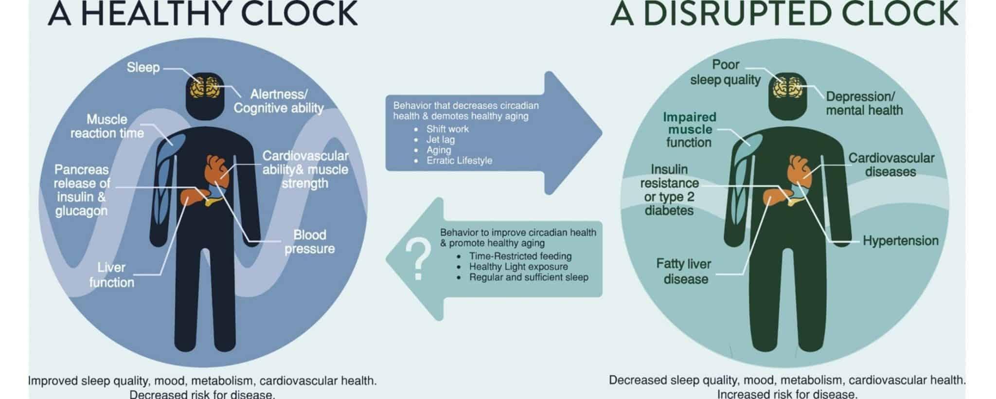Healthy and unhealthy circadian clock