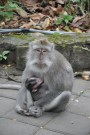 Bali - Monkey Forest Sanctuary