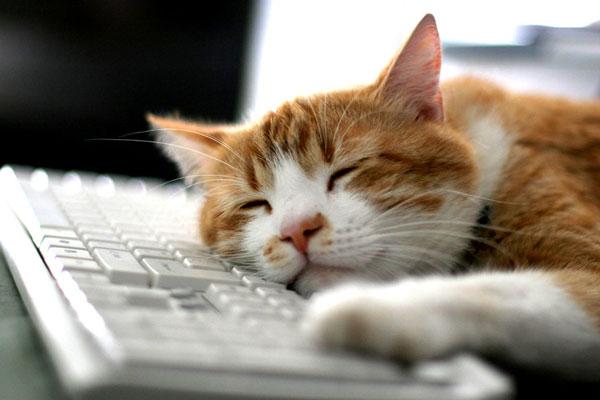 Почему нельзя обнимать и целовать кошек. Почему нельзя целовать кошек в морду
