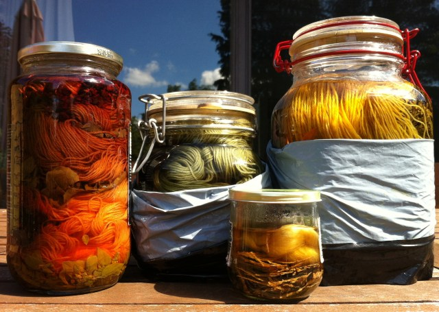 Solfarveglas. Fra venstre: krap/oregano, sort tulipan, thuja/bærmispel. Det lille glas er en prøve med thuja / solar dyeing jars. From left: madder root/oregano, black tulip, thuya/juneberry leaves. Small glass: testing thuya.