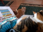 """My cats """"helping"""" me follow the Ravelry pattern."""