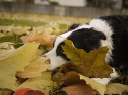Sleep Leaves