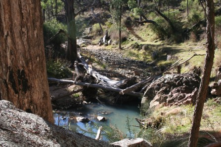 Wambelong Nature Trail, Warrumbungle Ranges (19)