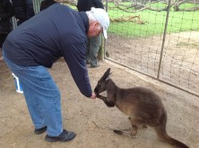 Day 19 Kangaroo Island Wildlife Park 2016-06-06
