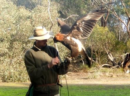 Raptor Domain Birds of Prey Kangaroo Island 2016-06-06 (14)