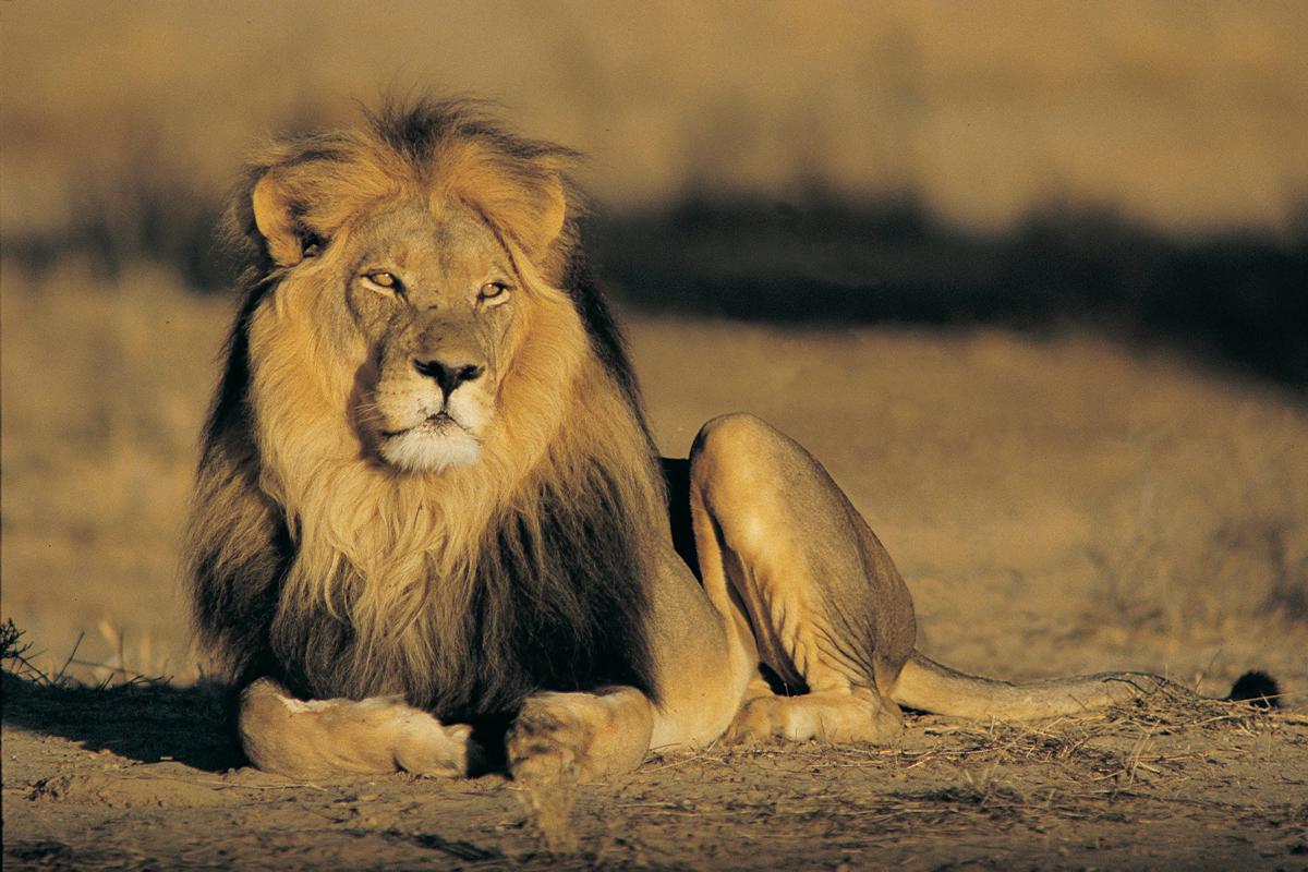 The Big 5 Safaris Garry Kelly Safaris