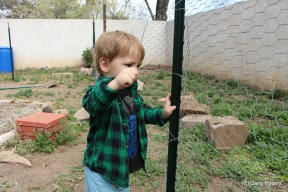 Alexander attaching the fence to the posts.