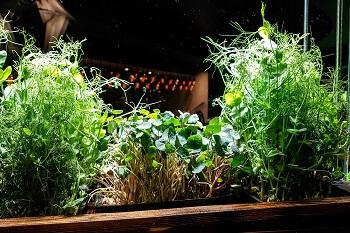 Kräuter Blumenkasten bepflanzen