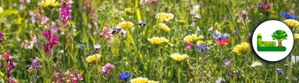 Die wilde Blumenwiese in Ihrem Garten. -Steiermark