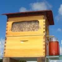 Honeyflow - so erntet man Honig ?