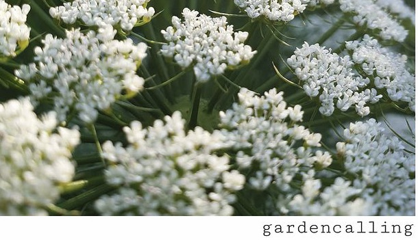 Gardencalling