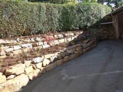 pfl-trockenmauer-bepflanzt