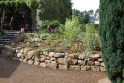 pfl-trockenmauer bepflanzung