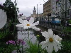 Blumenkaste an einer Brücke über Wasser und eine blaue Straßenbahn rechts im Hintergrund