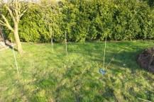 Um einen Baum herum sind Bambusstöcker aufgestellt und mit einem Faden verbunden