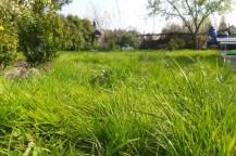 Lange Grashalme vom Boden aus fotografiert.