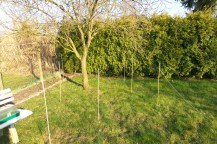 Rasenfläche abgesteckt mit Bambusstäben