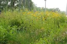 Hohe Blumenwiese mit gelben Blüten