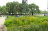 Wildblumenwiese mit amerikanischem Windrad und Trauerweiden im Hintergrund
