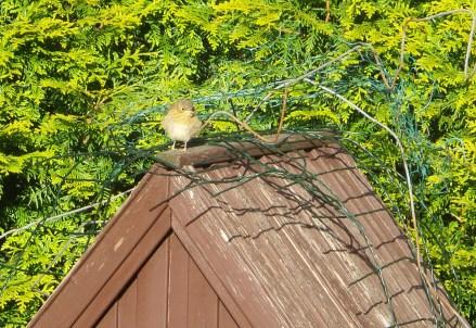 Kleiner, brauner Vogel sitzt auf dem Dach eines Vogelhäuschens