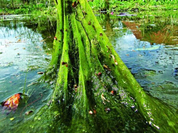 Algen Im Gartenteich Wie Bekampfen Gartenteich Ratgeber
