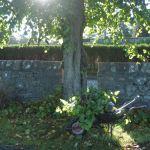 Keeping tree-bases tidy