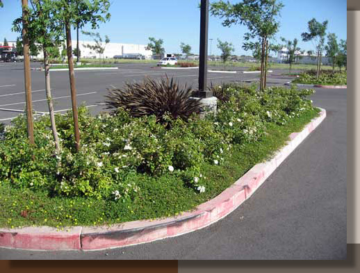 Tractor Supply Dixon California G R Landscape Architect